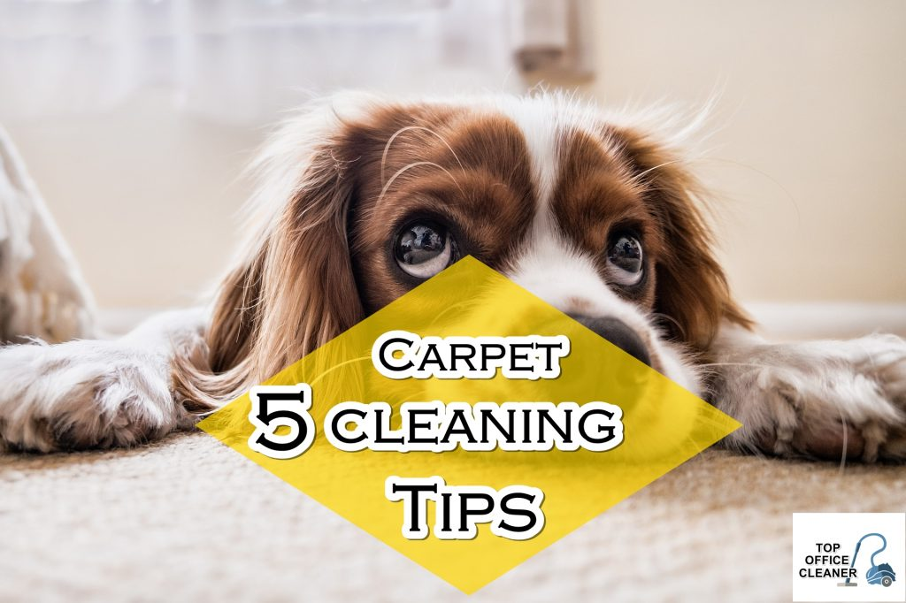 5 Carpet Cleaning Tips Even A 5-Year-Old Kid can do Topofficecleaner.com